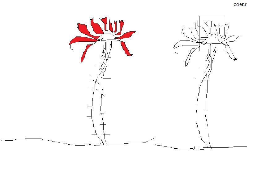 Ma Demande Une Rose Semie Fanee Sur Le Forum Arts Graphiques 07