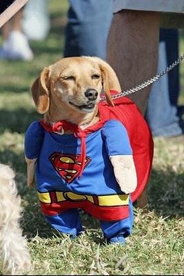 bonne année les pd 1357072730-superdog2