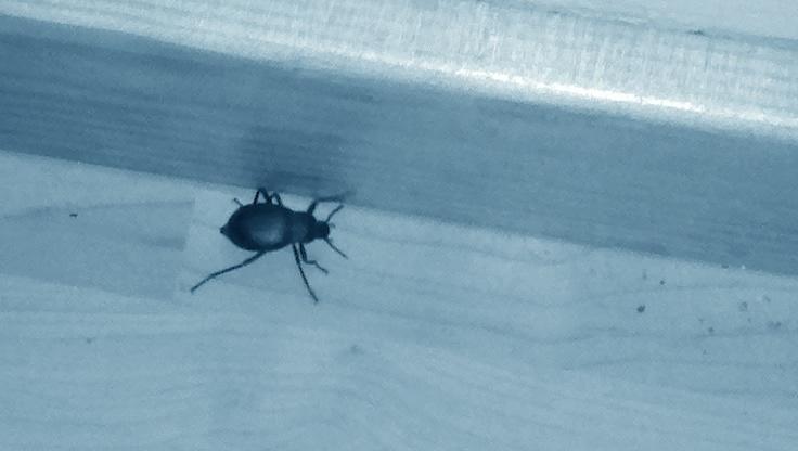Y a des insectes qui traînent chez moi 1397625200-2014-04-16-06-42-46-234