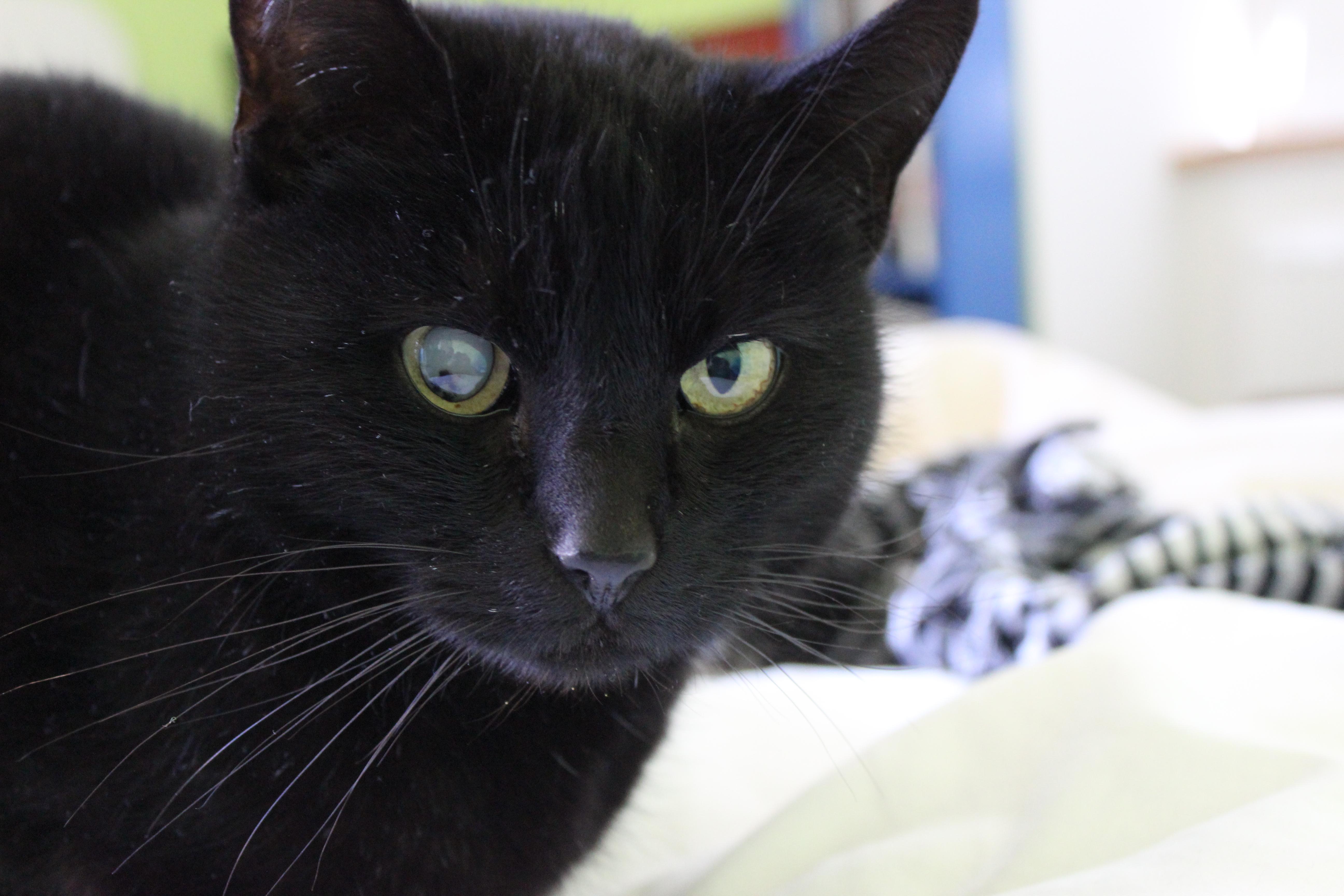 mon chat est mort sur le forum blabla 18 25 ans 19 04 2015 19 04 33. Black Bedroom Furniture Sets. Home Design Ideas