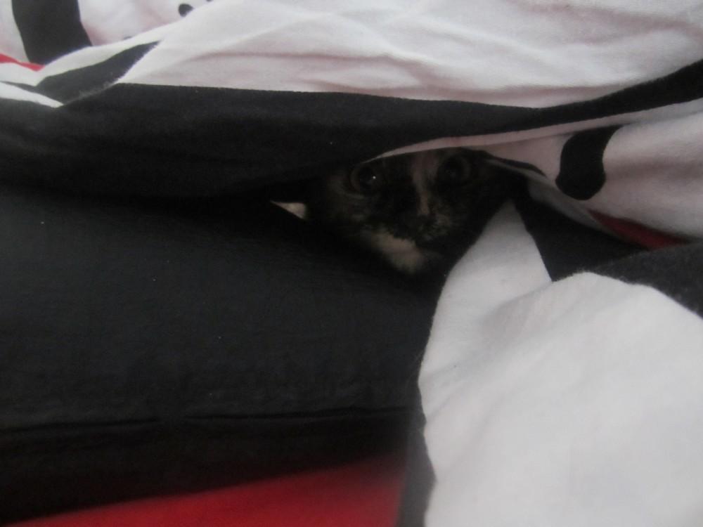 photo mon petit chat est mort hier sur le forum blabla 18 25 ans 21 09 2014 21 04 43. Black Bedroom Furniture Sets. Home Design Ideas