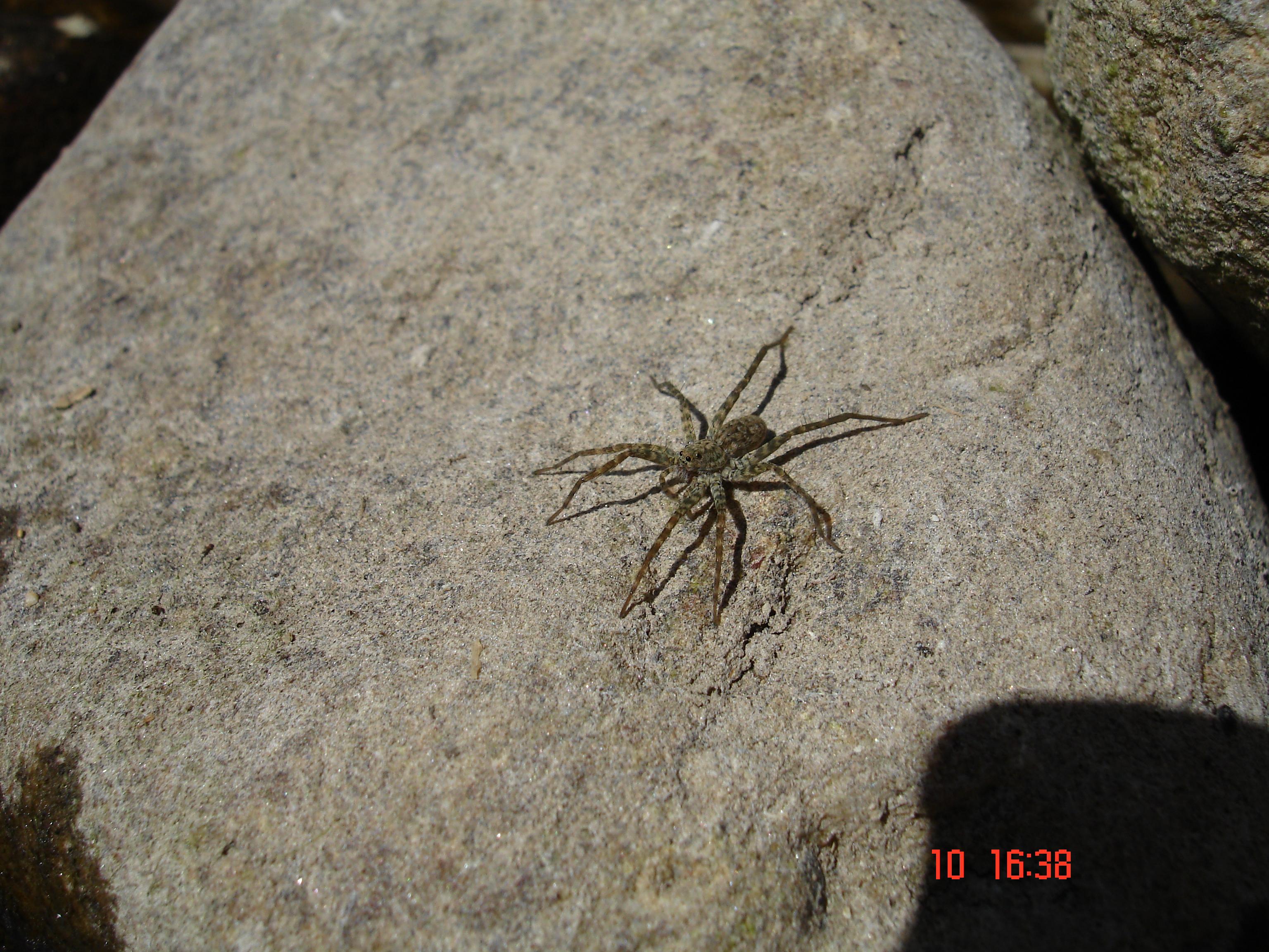 cette araign e juste au dessus de mon lit c 39 est quoi sur le forum blabla 25 35 ans 22 07. Black Bedroom Furniture Sets. Home Design Ideas