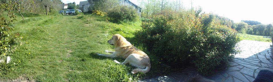 mon chien est mort cette apr s midi sur le forum blabla 18 25 ans 18 09 2015 18 04 43 page 3. Black Bedroom Furniture Sets. Home Design Ideas