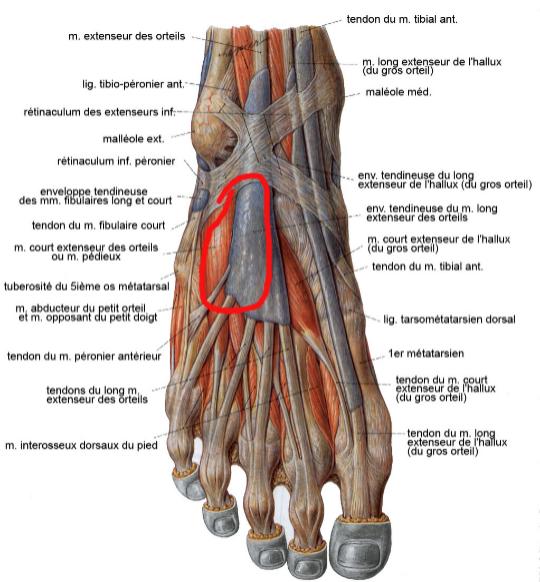 douleur dos du pied