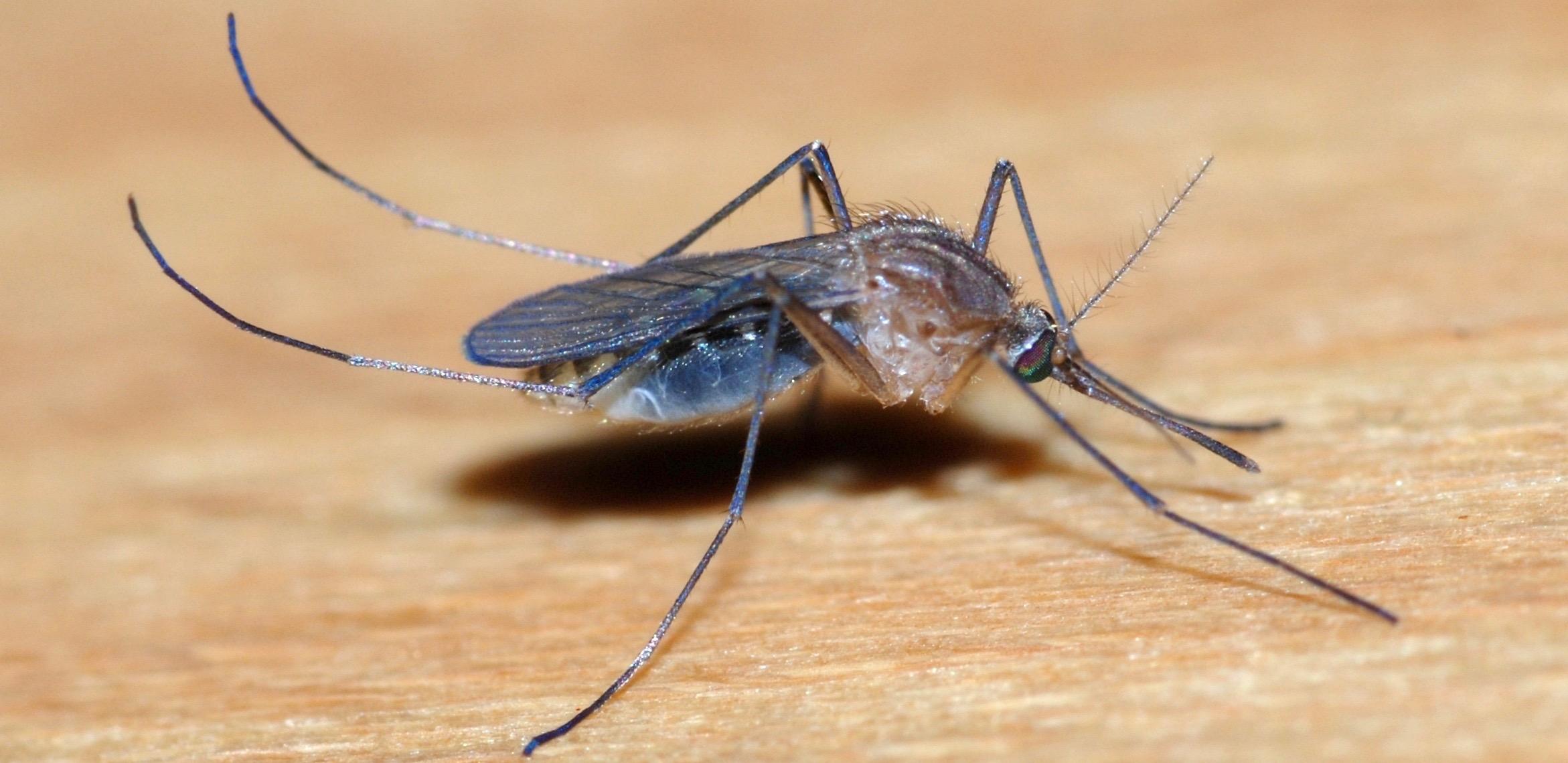 Et si vous repreniez le contrôle sur les moustiques ?