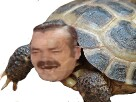 Sticker risitas tortue