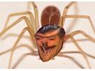 Sticker araignee deforme difforme