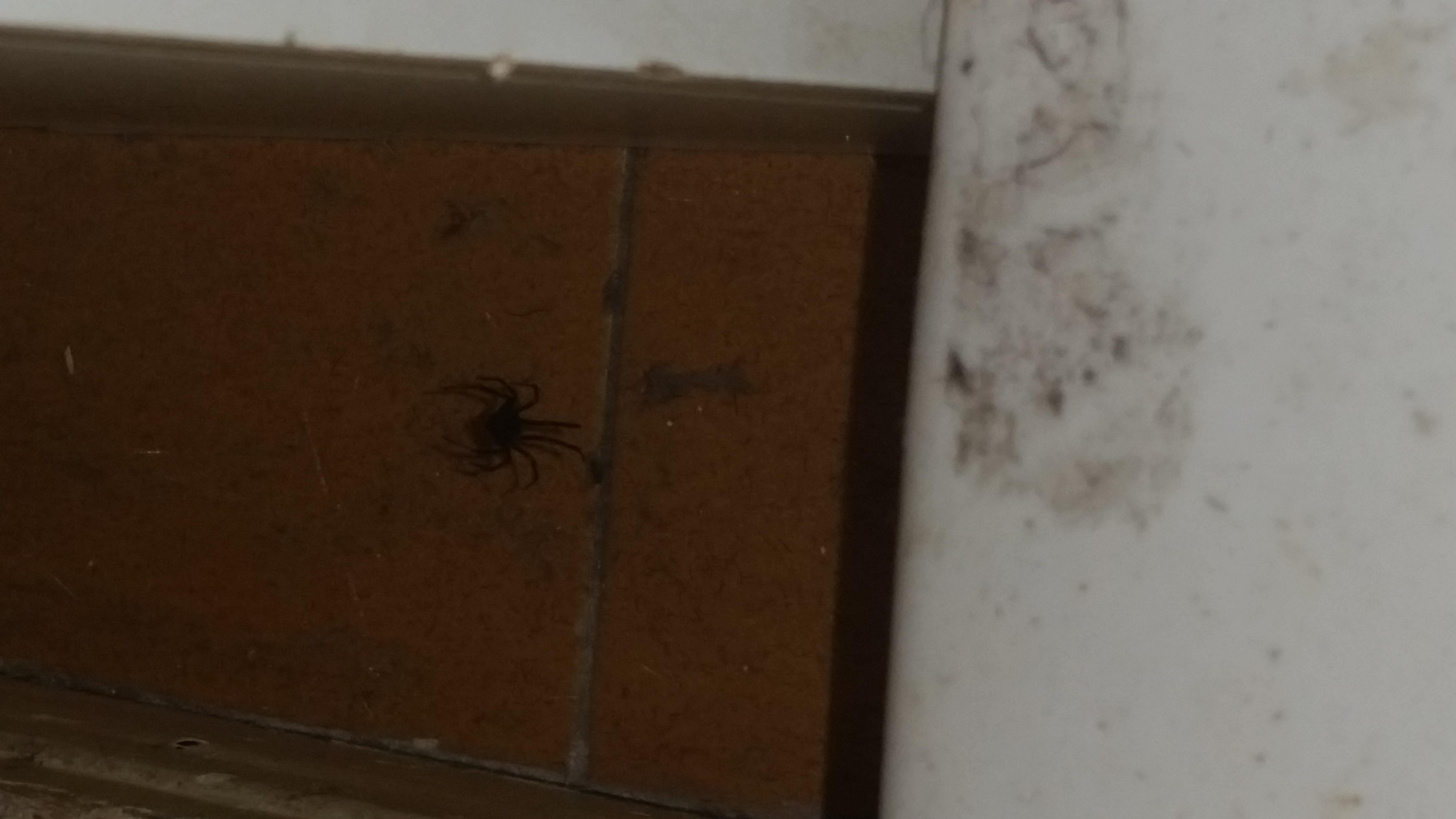 araignée dans la chambre