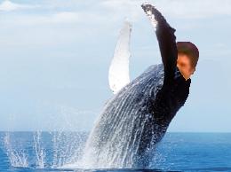 Sticker cetace baleine issou jesus tasse