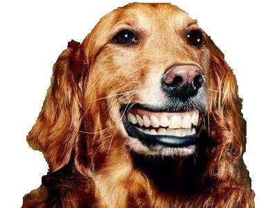 Sticker chien content