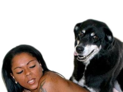 Sticker calmez vos soeurs chien baise content