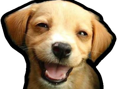 Sticker chien toutou sourire content moqueur tete a claque rire