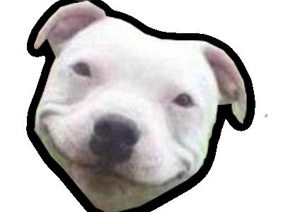 Sticker chien blanc moqueur sourire rire