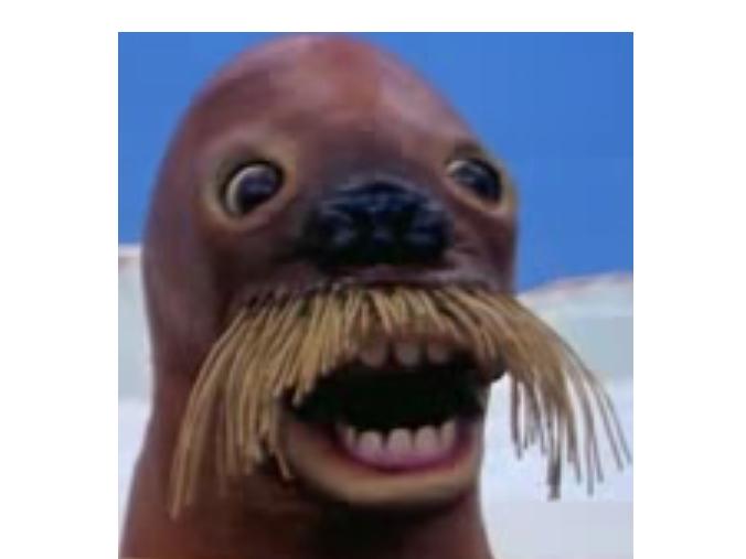 Sticker pingu phoque creepy
