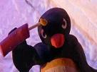 Sticker pingu bombe bomb allah akbar pingouin terroriste