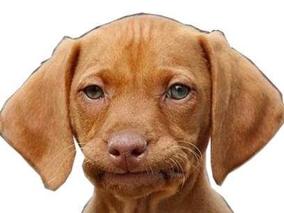 Sticker chien chelou blase triste humain
