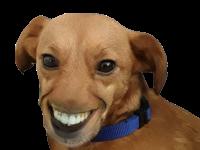 Sticker chien sourire wtf