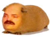 Sticker risitas hamster cochon d inde rongeur cute mignon blase ennui