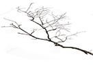 Sticker branche arbre anti servissou