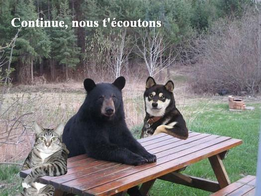 Sticker continue nous ecoutons parle toujours ours animal animaux chat chien