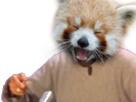 Sticker risitas bras main panda roux