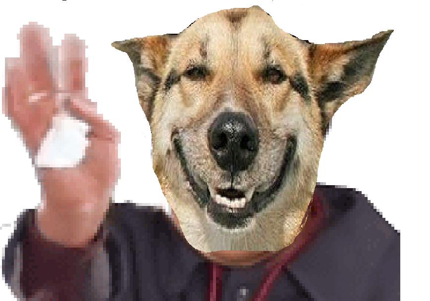 Sticker dog chien risichien