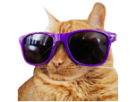 Sticker other twitch tv television stream emote emoticone coolcat