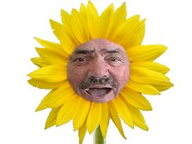 Sticker risitas fleur pensez printemps joyeux jaune bouche content tournesol plante