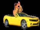 Sticker risitas accident jesus voiture jaune decapotable