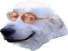 Sticker jvc chien chanceux la chance