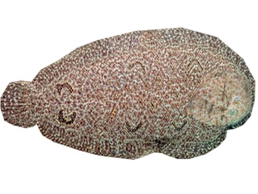 Sticker other larry chance camouflage poisson censure silverstein