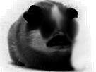 Sticker risitas cochon dinde hamster creepy horrible diable demon enfer rongeur cute mignon adorable atome