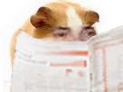 Sticker risitas cochon dinde hamster rongeur cute mignon adorable atome