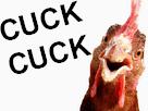 Sticker jvc cuck coq poule poulet
