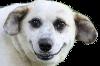 Sticker other chien dog animal sourire
