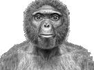 Sticker risitas macaque singe perplexe