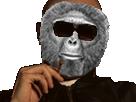 Sticker risitas alkacaque singe macaque