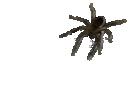 Sticker araignee risitas jesus risignais bebette ecran peur horrible