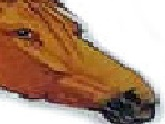 Sticker other cheval dessin malin