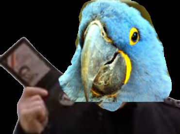 Sticker other spix macaw blu ara polic policier police gilbert papier passeport