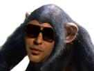 Sticker other alkpote arabe singe chimpanze