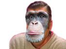 Sticker risitas singe chimpanze