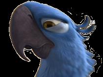 Sticker other spix macaw blu rio