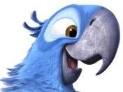 Sticker other spix macaw blu rio joie