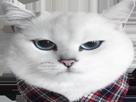 Sticker other coby cat nenoxx