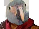 Sticker other ara de spix oiseau jesus quintero issou rire perroquet