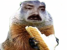 Sticker risitas marmotte animal animaux cochon dinde rongeur