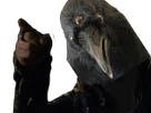 Sticker risitas corbeau doigt euron got game of thrones raven