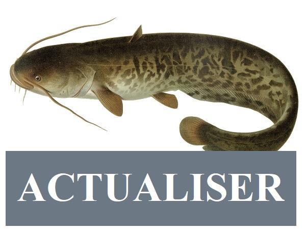 Sticker risitas silure poisson actualiser