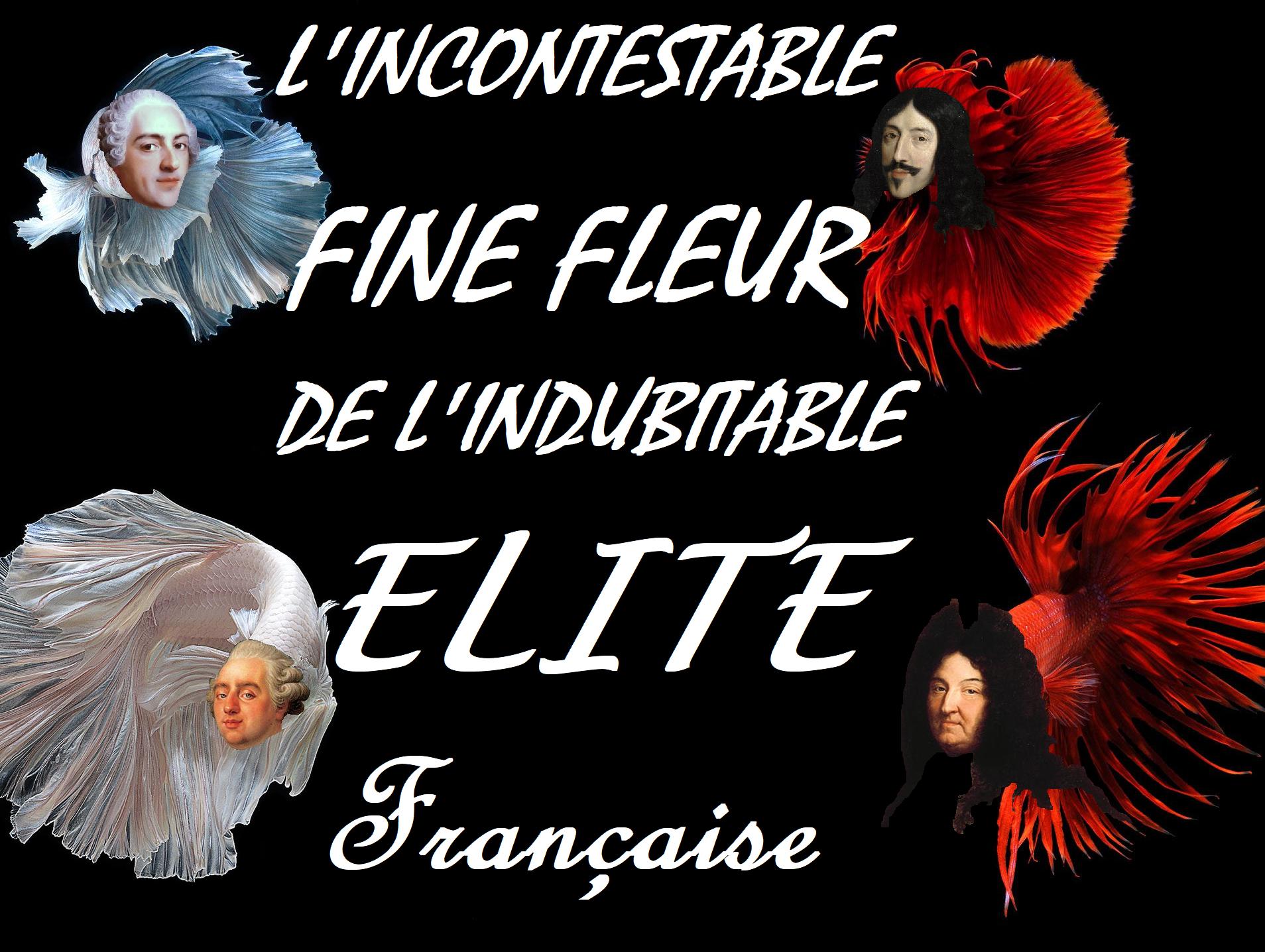 Sticker risitas poisson combattant du siam roi elite france